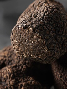 11-truffe