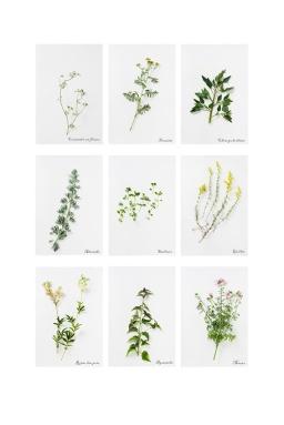 22-herbier-03