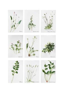 23-herbier-05