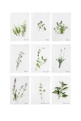 24-herbier-08